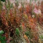 autumnfield-12