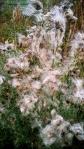 autumnfield-19