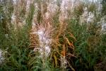 autumnfield-20