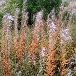 autumnfield-7