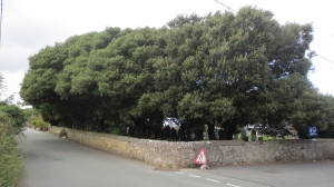 treesoriginal