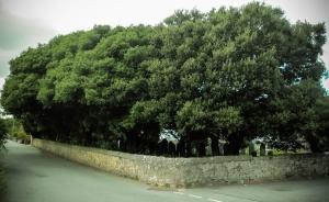 treesworkedon