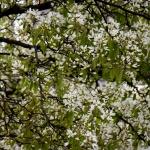springtree4