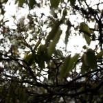 springtree6