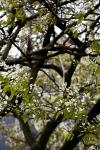 springtree7