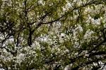 springtree8