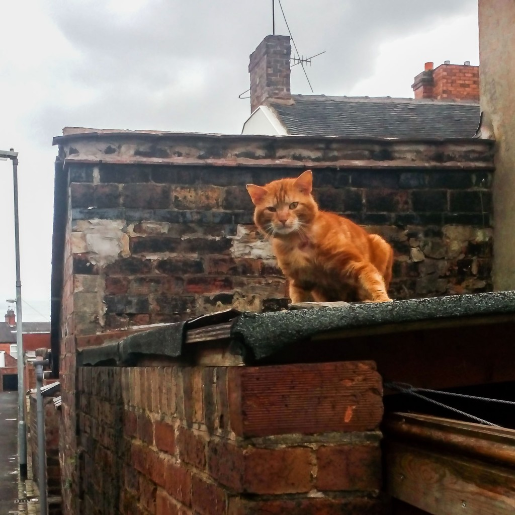 annoyedcat1