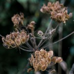 seeds4