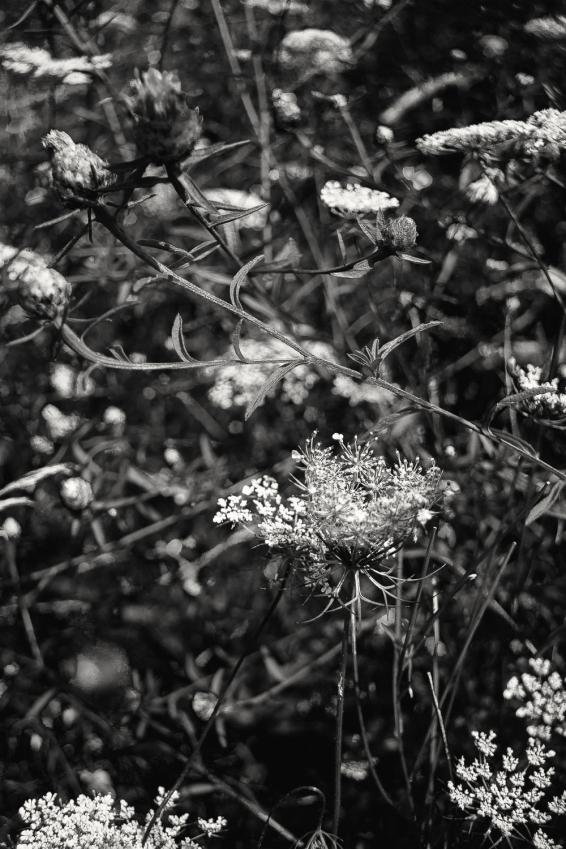 wildflowers5