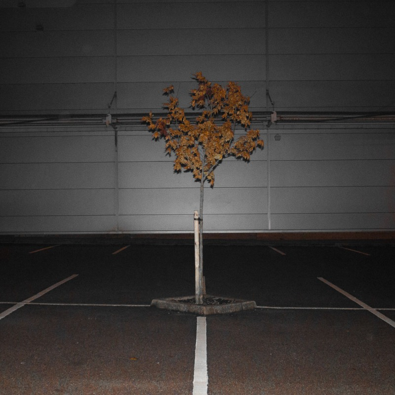 autumnnite