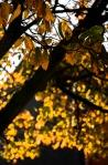 autumntree3