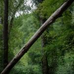 treeanglefrance