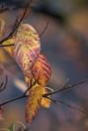 autumntree5