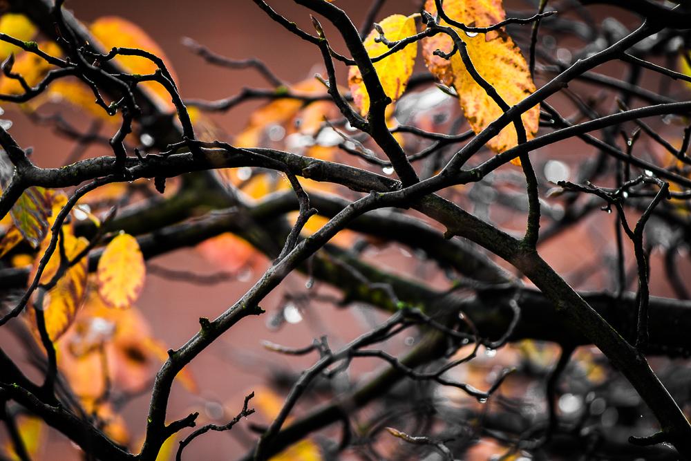 treedropsss