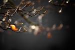 treelight2