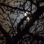 eclipsetree2