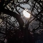 eclipsetree4