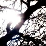 eclipsetree5