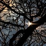 eclipsetree6