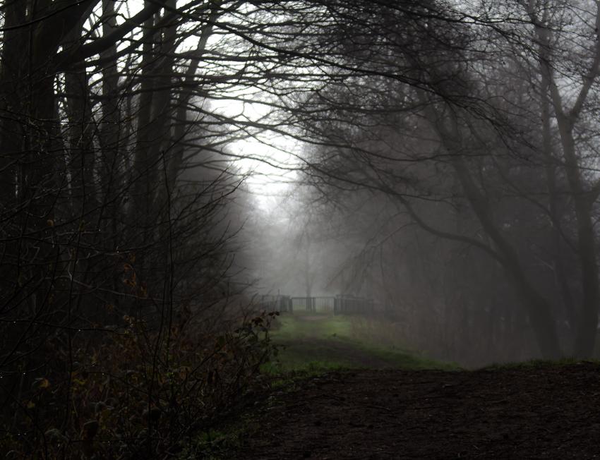 misty4