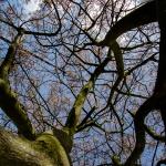 springtree1
