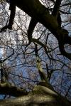 springtree2