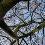 springtree3