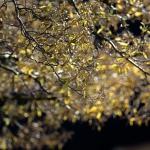 springtreecloser1