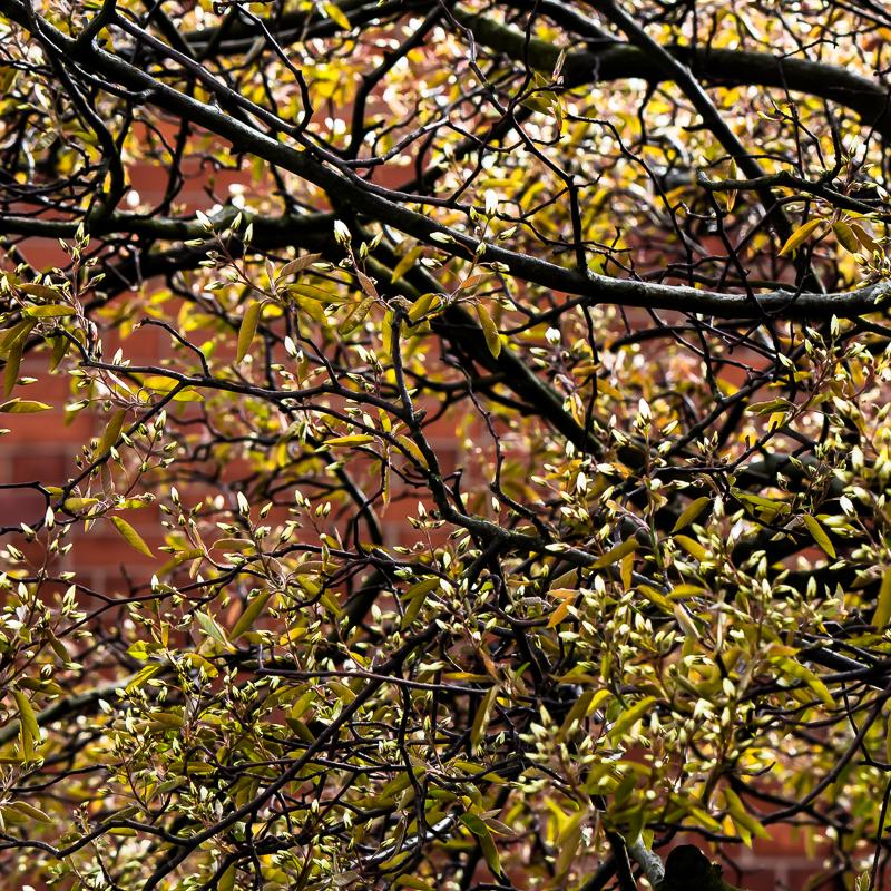 springtreecloser3
