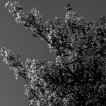 treebw1