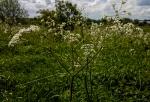 springstart1