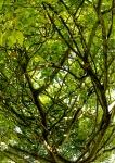 treemaysun3