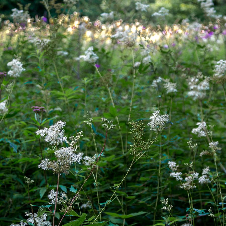 weedscromford1