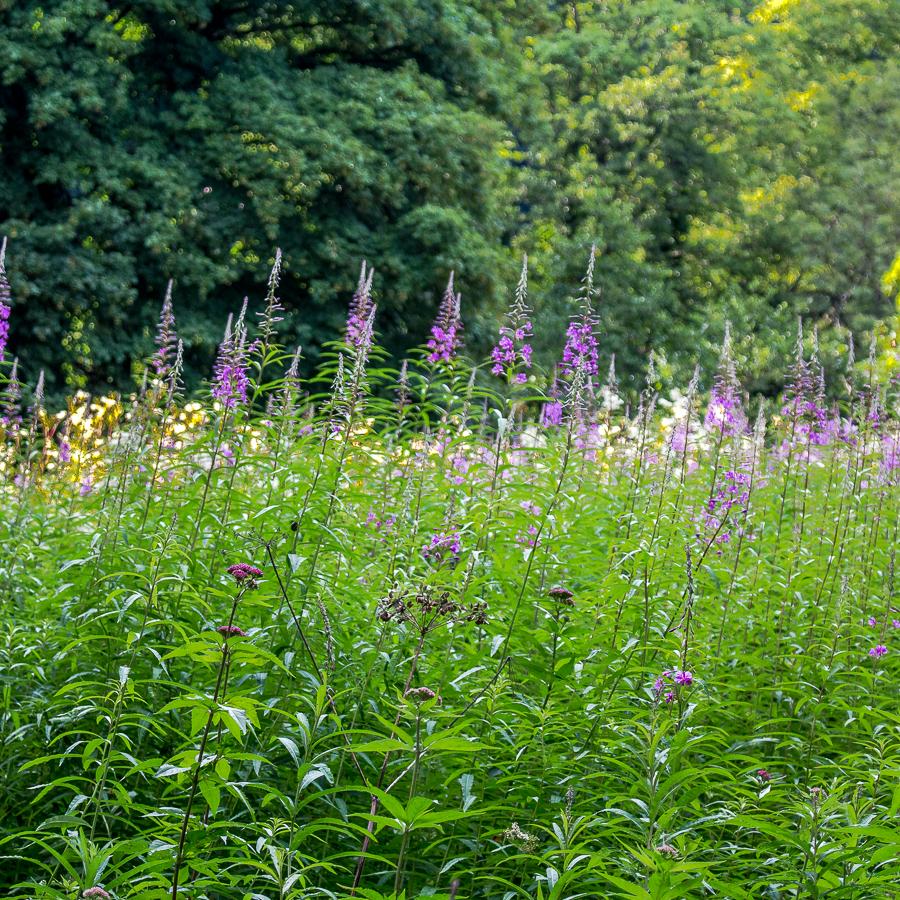weedscromford2