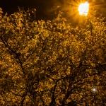 treenight1