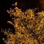 treenight2