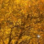 treenight3