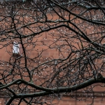 treedripjan22016