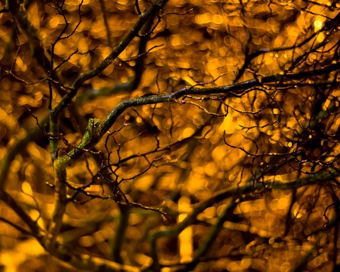 treegold1