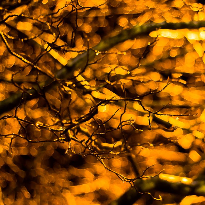 treegold2