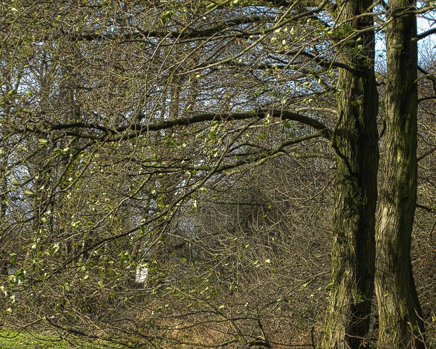 treesunwind
