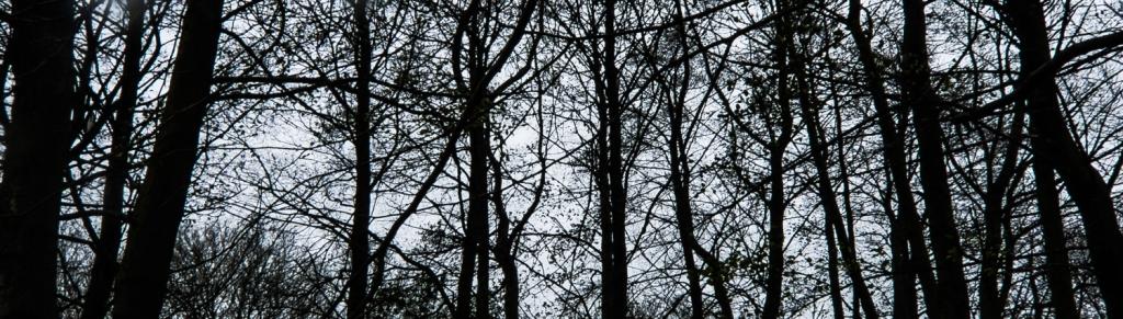 treeswinter1a