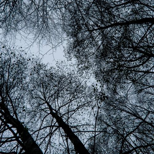 treeswinter2