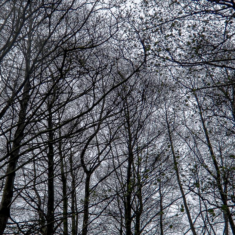 treeswinter3