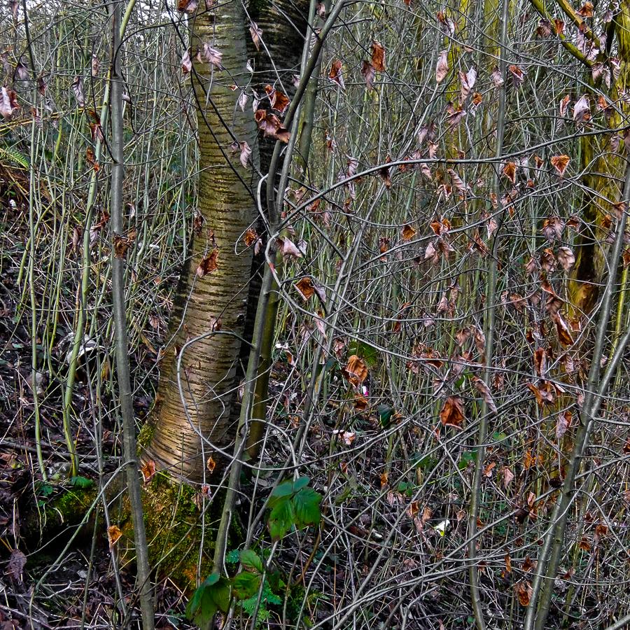 undergrowth1