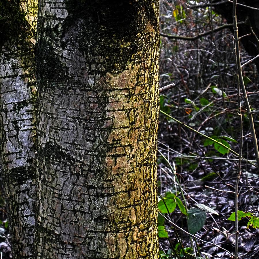 undergrowth4