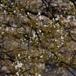 tree16041