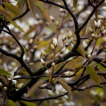 tree16043