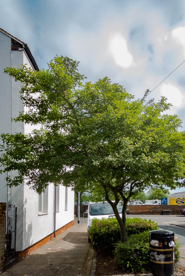 tree26161a