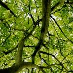 tree26162